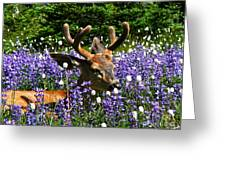 Flowerbed Greeting Card