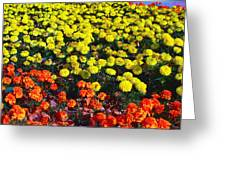 Flowerbed Of Narcissuses Greeting Card