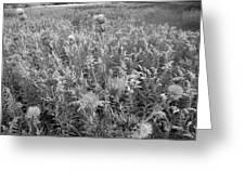 Flowered Field Greeting Card