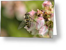 Flowerfly Pollinating Blueberry Buds Greeting Card