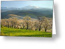 Flowering Almond At The Mountains Greeting Card