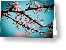 Flowering Branches Greeting Card