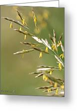Flowering Brome Grass Greeting Card