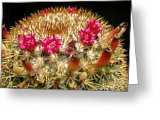 Flowering Cactus Greeting Card