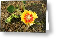 Flowering Cactus Greeting Card