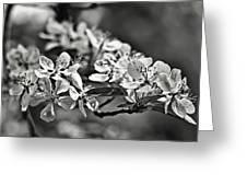 Flowering Crabapple 2 Bw Greeting Card
