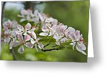 Flowering Crabapple 2 Greeting Card