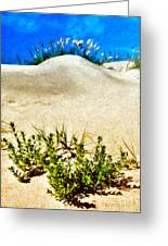 Flowering Dunes - Outer Banks Greeting Card by Dan Carmichael