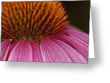Flowering Inferno Greeting Card