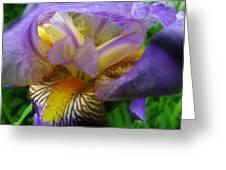 Flowering Iris Greeting Card