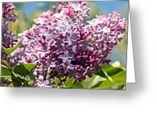 Flowering Lliac Bush Greeting Card