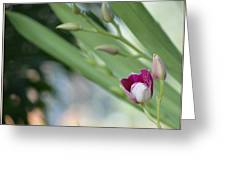 Flowering  Orchid Stem Greeting Card
