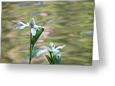 Flowering Pond Plant Greeting Card