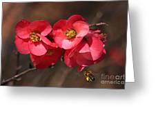Flowering Quince With Bee Greeting Card