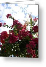 Flowering Skyward Greeting Card