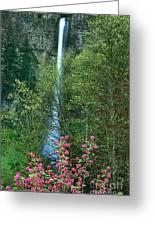Flowering Tree Below Multnomah Falls Columbia River Gorge Nsa Oregon Greeting Card