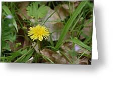 Flowers 157 Greeting Card