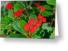 Flowers 2 Greeting Card
