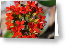 Flowers 4 Greeting Card