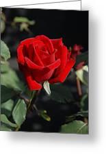 Flowers 452 Greeting Card