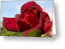 Flowers 459 Greeting Card