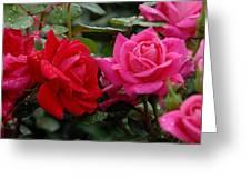 Flowers 521 Greeting Card