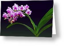 Flowers - Aerides Lawrenciae X Odorata Orchid Greeting Card