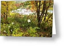 Flowers Along The River In Fall Greeting Card