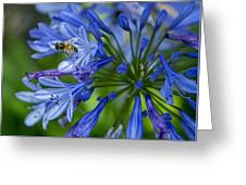 Flowers And Bee Greeting Card
