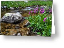 Flowers And Stream Greeting Card