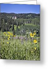 Flowers At Crested Butte Greeting Card