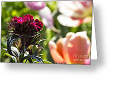 Flowers At Dallas Arboretum V13 Greeting Card