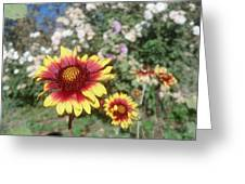 Flowers At The Farm Greeting Card