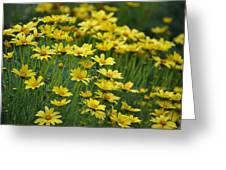 Flowers At The Gardens Greeting Card