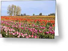 Flowers Blooming In Tulip Field In Springtime Greeting Card