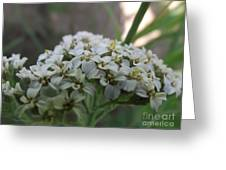 Flowers Close-up Greeting Card