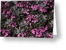 Flowers Dallas Arboretum V16 Greeting Card