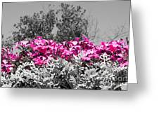 Flowers Dallas Arboretum V17 Greeting Card