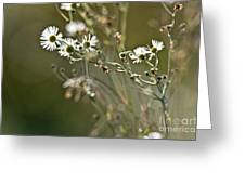 Flowers End Greeting Card