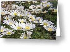Flowers Galore Greeting Card