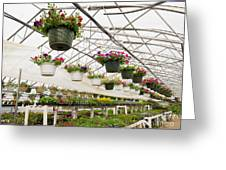 Flowers Growing In Foil Hothouse Of Garden Center Greeting Card