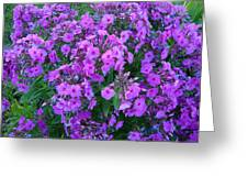 Flowers In Idaho Falls Greeting Card