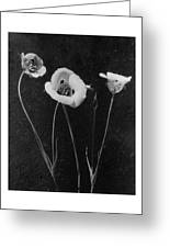 Flowers In Louise Beebe Wilder's Garden Greeting Card