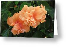 Flowers In Peach Greeting Card