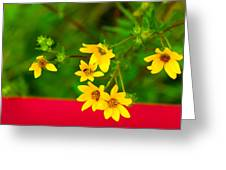 Flowers In Red Fence Greeting Card