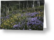 Flowers In The Aspen Forest Greeting Card
