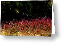 Flowers In The Breeze Greeting Card