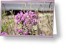 Flowers In The Grass 8891 Greeting Card