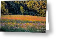 Flowers In The Meadow Greeting Card