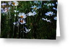 Flowers In The Rain - Daisies  Greeting Card